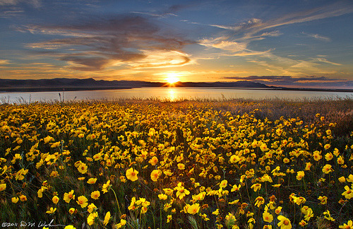 llbwwb:  Monolopia Sunset, Carrizo Plain (by DM Weber)