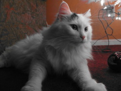 #14!! Friday December 30th, 2011.. My cat..