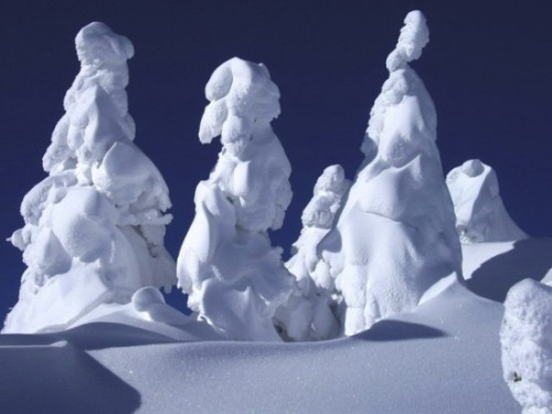 The snow monsters of Japan. These are snow and ice covered trees, known as juhyou in Japan.
