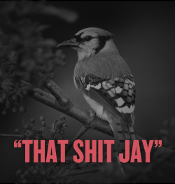 """That shit jay"""