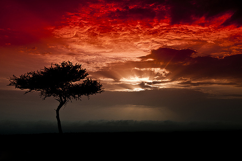 zombisexual:  Sunset (by Khalifa Ahmed)