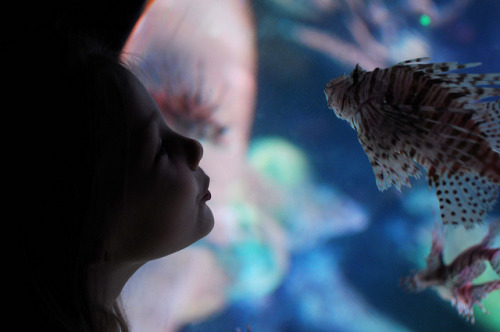 fish kiss on Flickr.