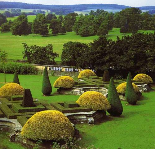 The Golden Yews at Chatsworth.