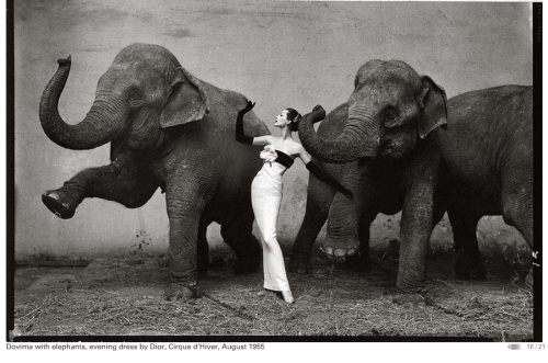 DOVIMA WITH  ELEPHANTS, AUG 1955  DRESS BY: DIOR PHOTOGRAPHER: RICHARD AVEDON