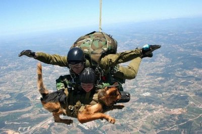 "collegehumor:  Sky Diving Army Dog This is exactly like the movie ""Operation Dumbo Drop."""
