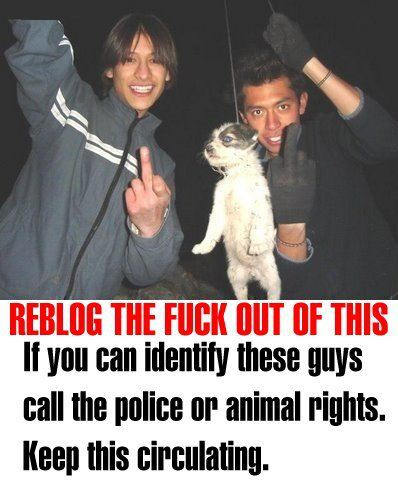PLEASE REBLOG THIS PICTURE! DONT JUST LIKE IT! IT'S EXTREMELY IMPORTANT!