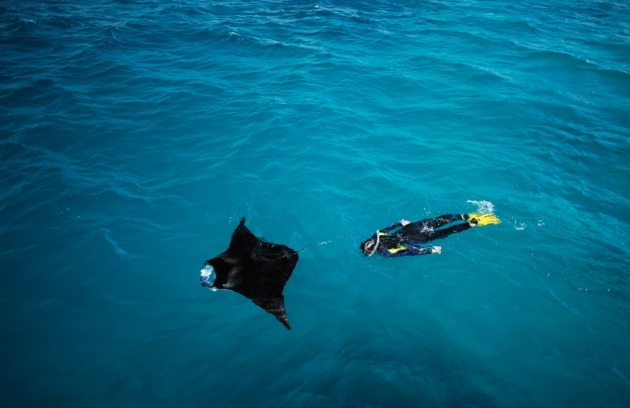 oceansoftheworld:  (Photo by Thomas Peschak) Manta Ray (see this post).