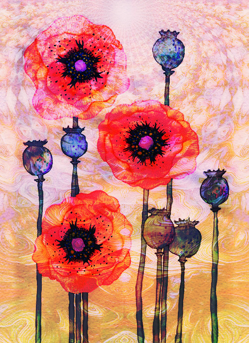 INSPIRATIONS lemon2jul: Poppy flowers