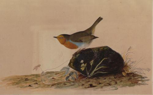 A Robin Perched on a Mossy Stone  1826  John James Audubon