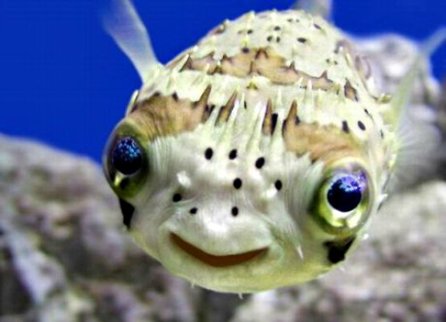 Happy fish says that if you experience slowness or glitches on AGBeat, all systems are up on our end, so we invite you to email us at talk@agbeat.com and someone will get flogged. HAPPY DAY!
