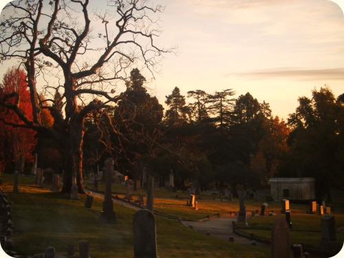 Walks through Piedmont Cemetery in Oakland.