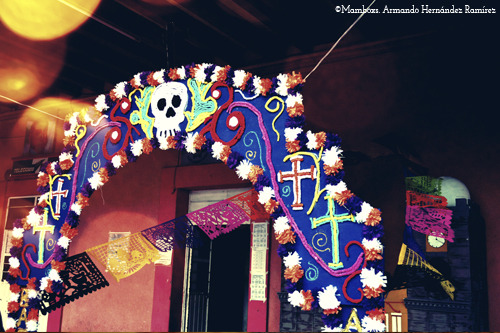 mamboomfg:  The Day of the Dead celebrations in Mexico can be traced back to the indigenous cultures. Rituals celebrating the deaths of ancestors have been observed by these civilizations perhaps for as long as 2,500–3,000 years.In the pre-Hispanic era, it was common to keep skulls as trophies and display them during the rituals to symbolize death and rebirth.
