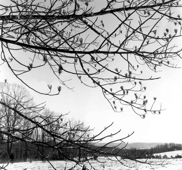 Photo by Thomas Merton from louie, louie.
