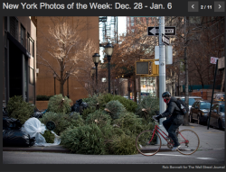 "This is so sad :( Everyone should  buy a potted christmas tree and then replant them, or get a fake one! ""Discarded Christmas trees were piled at Amsterdam and 67th Street in Manhattan on Jan. 3."" - Wall Street Journal Photos of the Week."