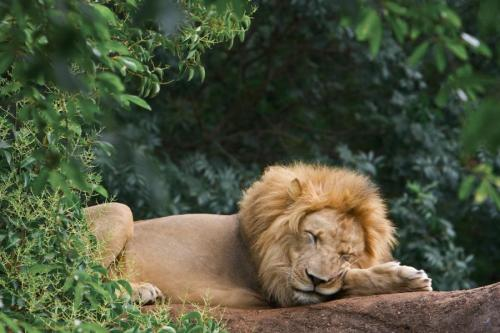 llbwwb:  Tired King by Harold Skaggs