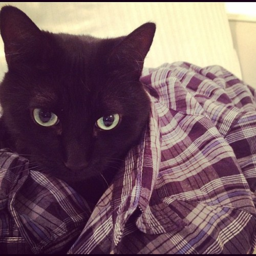 hipster cat looks sad, wears plaid (Taken with instagram)