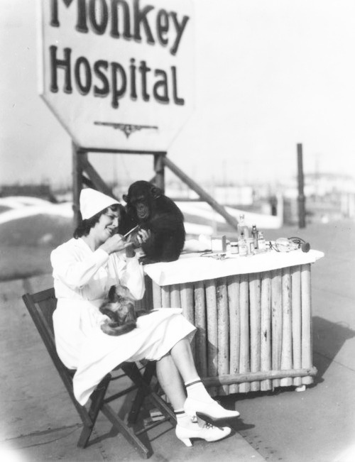 A nurse cares for a chimpanzee at the Luna Park monkey hospital in Lincoln Heights, California - c. Late 1920s