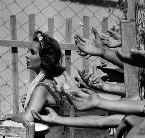 Elizabeth Taylor in Suddenly, Last Summer (1959, dir. Joseph L. Mankiewicz) Photo by Burt Glinn (via)