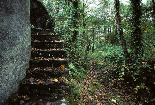 moanarch:  Hidden Stairway by padams on Flickr.