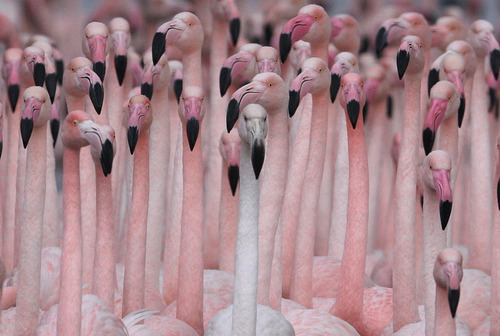 "slushy:  ""Flamingos improve my day"" AGREED."