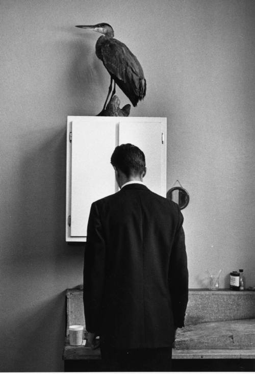 wonderfulambiguity:  André Kertész, The Heron, 1969