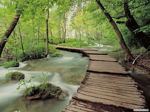 (via boardwalk, bridge, creek, forest, landscape, nature - inspiring picture on Favim.com)
