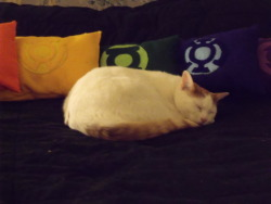 drivenbats:  Artie asleep with my Lantern Corps pillows.