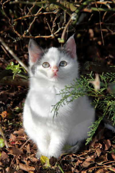Came across this kitten today looking all angelic on a bright mild sunny day.. I thought it was supposed to be winter smile