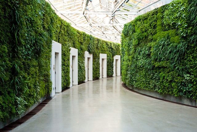 Vegetated corridor by nikkornova on Flickr.