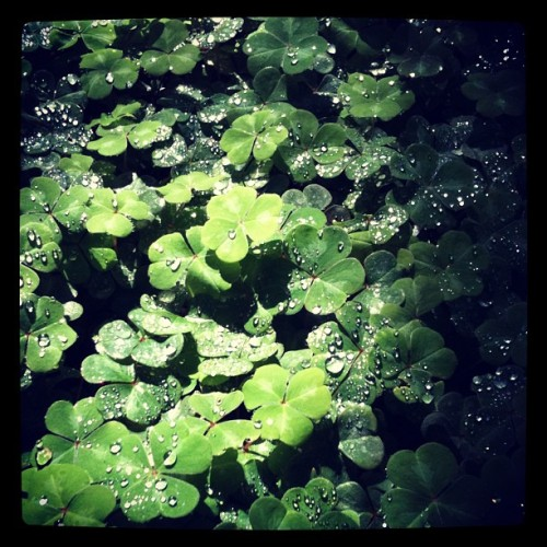 audaciaxx:  like the irish. (Taken with instagram)