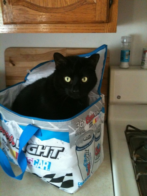 get out of there cat. you are not beer. you're more of an indycar fan anyway.