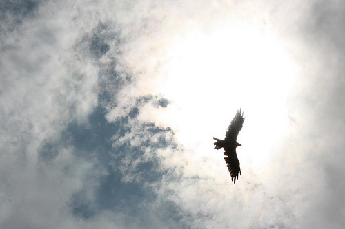 Ragged Eagle (by Tashi Jackson)