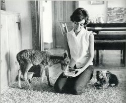 Audrey Hepburn and her deer