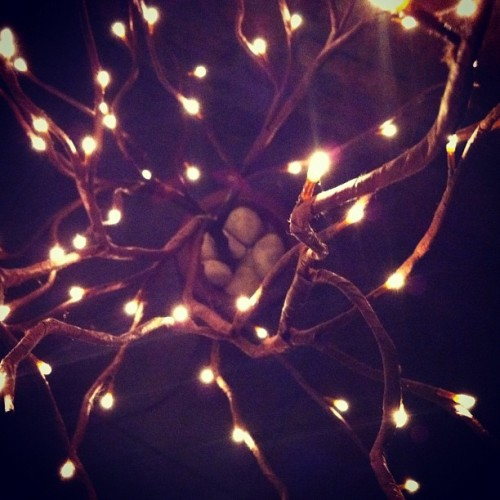 Christmas tree. #light #home #branch (Taken with instagram)