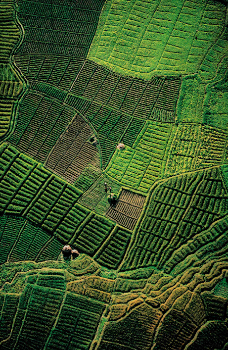 cratered:  Rice fields (the Jyapu of Nepal), National Geographic, July 1987