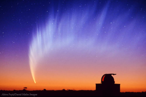 cwnl:  Glorious Southern Comet by David Malin Comet McNaught 2006 P1, Chiro Observatory in Western Australia. Comet McNaught was the brightest comet in four decades.