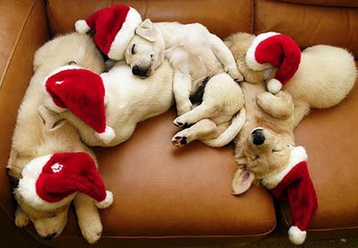 A bunch of golden retriever puppies are sleeping on a couch with Santa Claus's hats. Cuties!