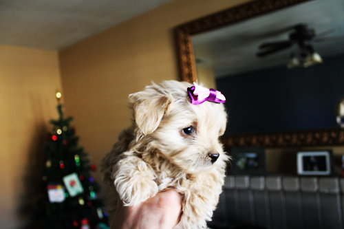 This is the cutest little puppy with a purple bow on top of her head. Such a cutie :)