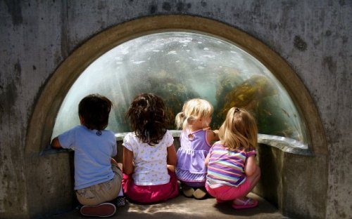 "Kids and families love the Aquarium—especially our Wave Crash exhibit, which pumps about 600 gallons of water and ""crashes"" every 30 seconds. Watch out! It's also one of our most popular photo opportunities. Care to share your own Wave Crash photos here?"