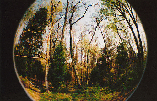 definitelydope:  woods (by kat tryon)