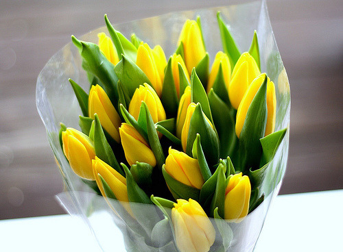 I love yellow flowers and I ADORE tulips:)