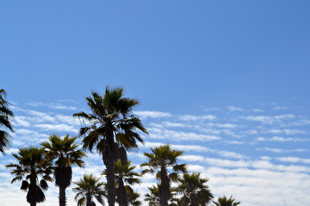 Cali palm trees by: Jackie Hassin