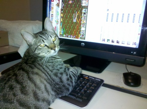 getoutoftherecat:  get off of there cat. this farmville obsession has gone two far. you've been on there for 48 hours straight. i want to check my email.  A necessary Tumblr.