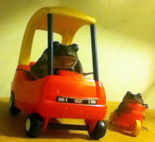 the-absolute-funniest-posts:  todthetoad: RIDIN DIRTY ((CHEERIN UP UR MONDAY ;))