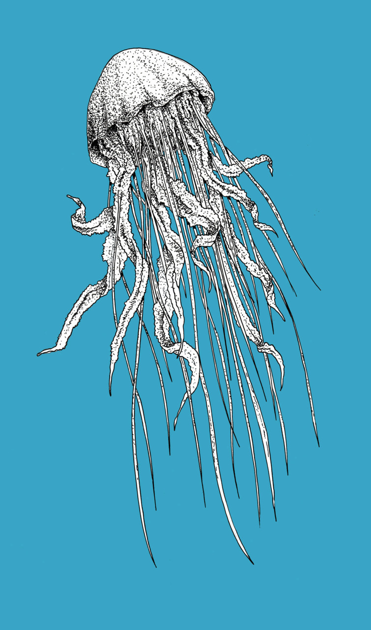Jellyfish | Fine liner & photoshop / 297 x 420 mm