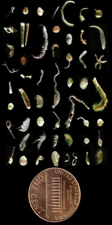 "curiositycounts:  ""A mere handful of seafloor mud may contain as many species as are found in a square meter of tropical rainforest."" Reminiscent of the One Cubic Foot project.  This is my new desktop wallpaper. I could stare at it for hours."