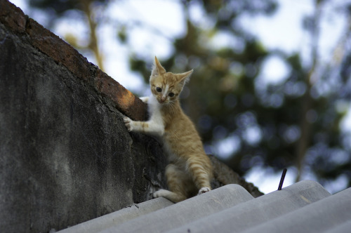 bandh:  Kitten playing on the roof by Andres Moreira Photo featured in the B&H Photo Flickr Group