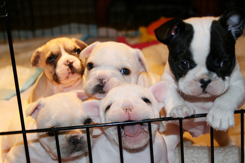 relaxitsjustmebruh:  Puppies!!