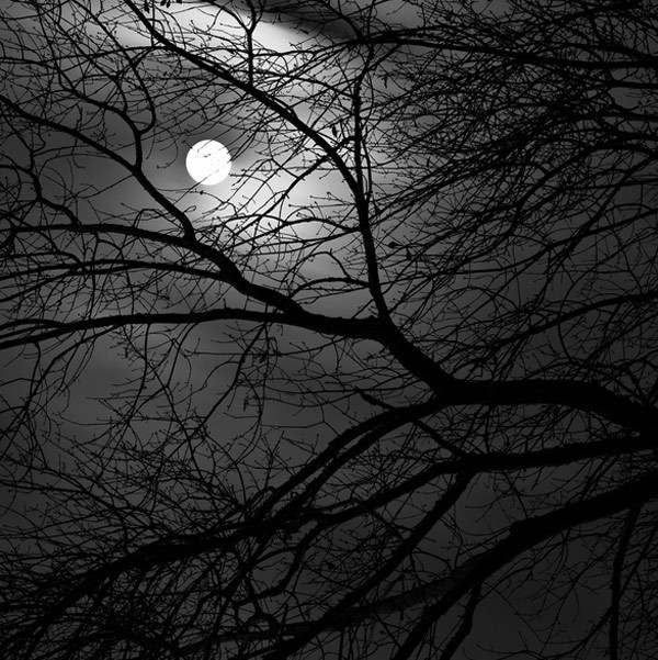 black-and-white:   (via Trees by Michelle Morris)