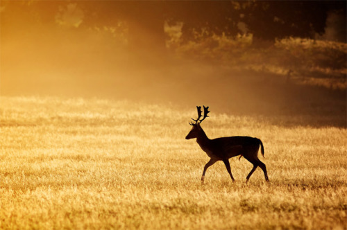 Photographer: Mark Bridger